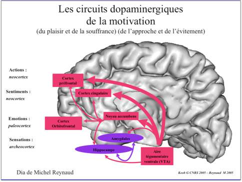 m-circuits dopaminergiques de la motivation