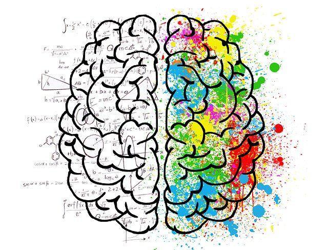 brain cerveau