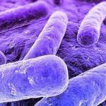 Mycoplasma genitalium