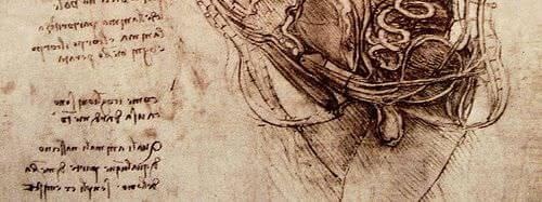 Anatomie et physiologie de l'appareil sexuel masculin